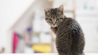 二子玉川のピラティス&小顔・美脚整体 | Hug&Smiley 猫